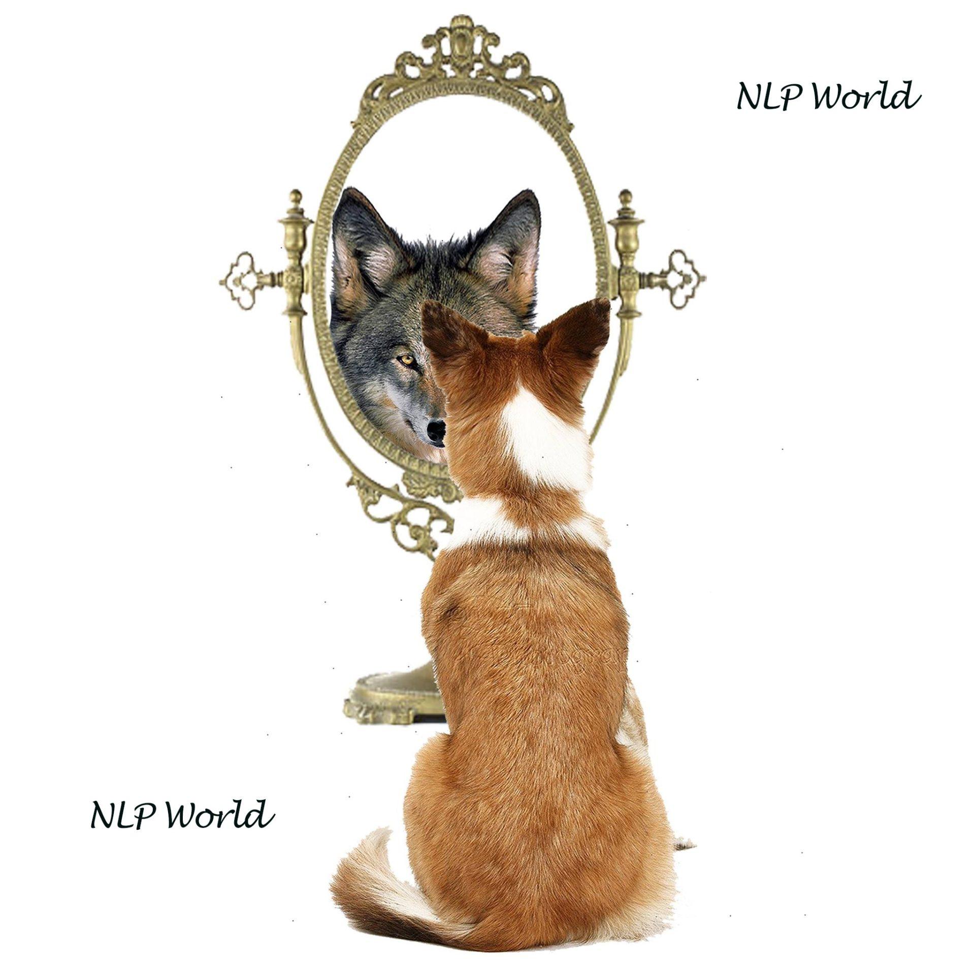 nlp perceptual positions