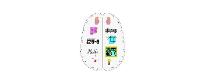 brain compartments