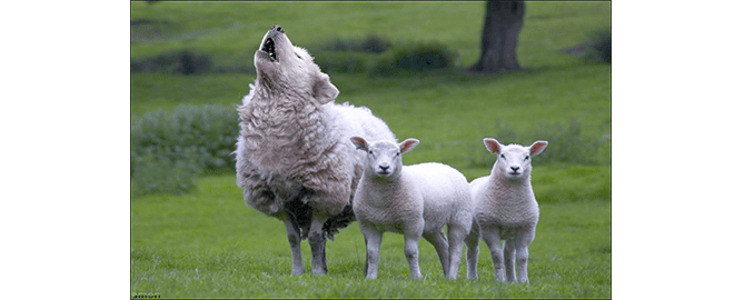Are we making people into sheep as we work with clients?